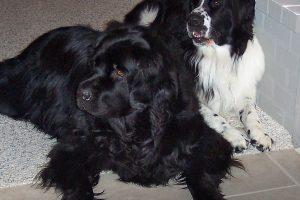 2006_Raffa&Caesar-L