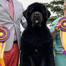 finnegan win best of breed at regional specialty 2019
