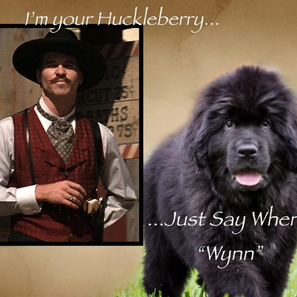 Huckleberry arrival