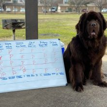 ownc dog proudly poses with draft result board