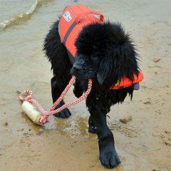 Lamar - water rescue puppy training